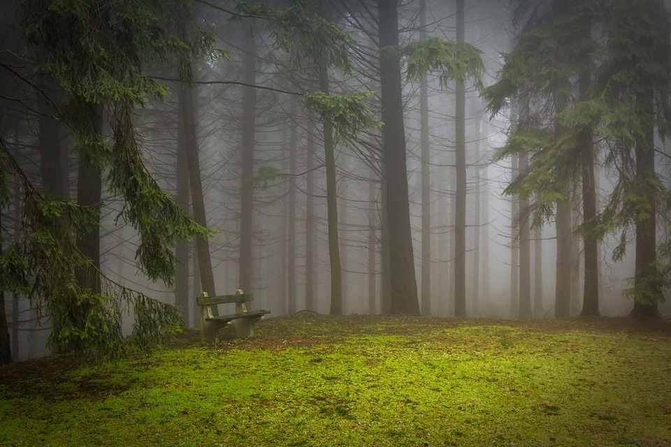 the forest creative writing